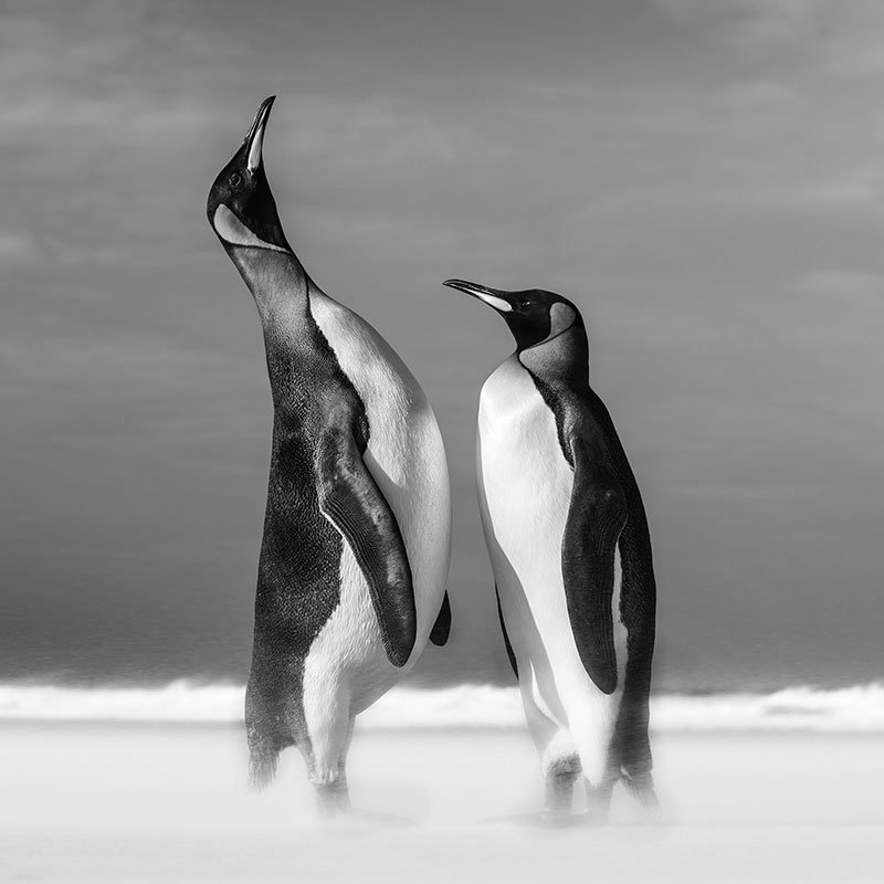 David Yarrow All You Need Is Love featured