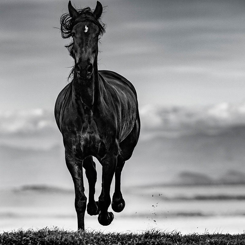 David Yarrow Black Beauty featured