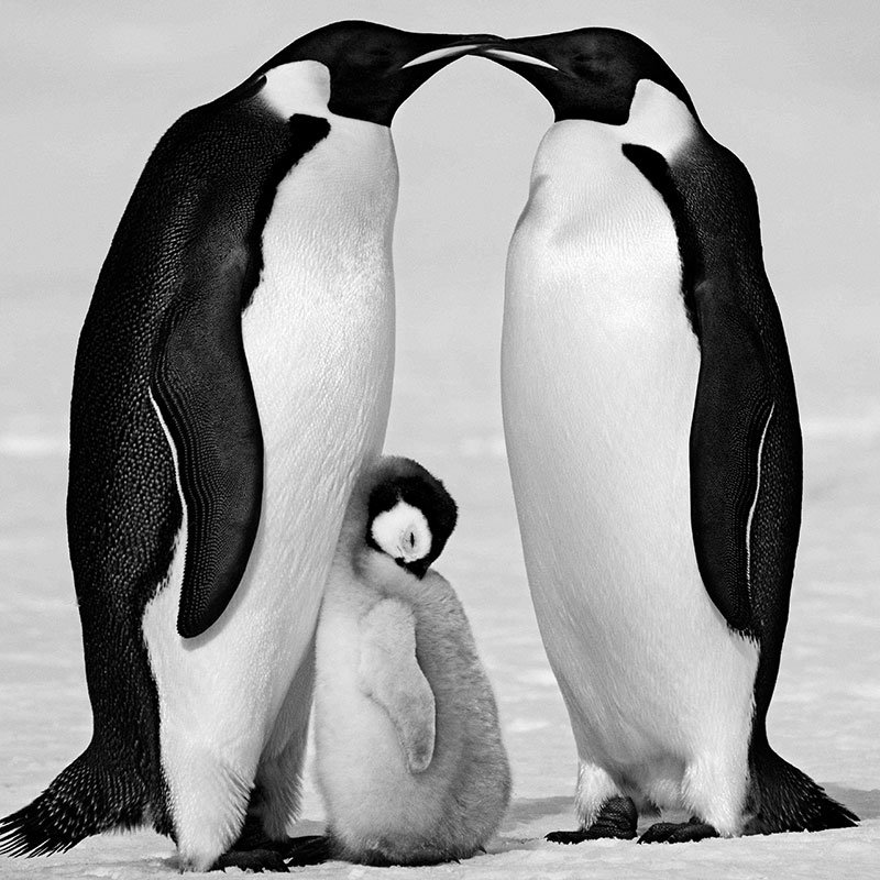 David Yarrow Contentment featured