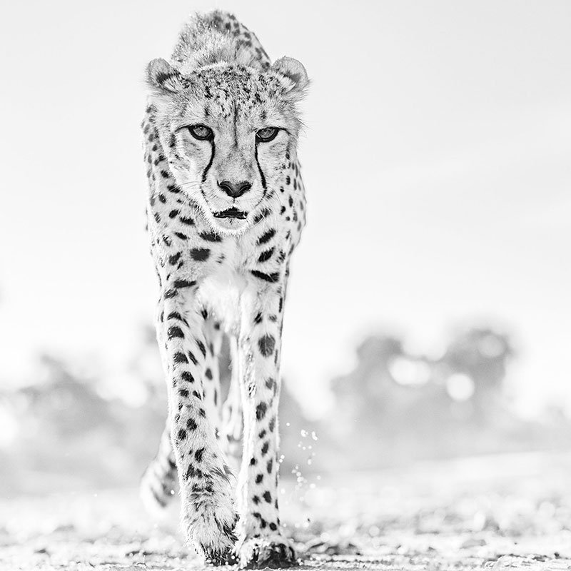 David Yarrow Hot Legs featured