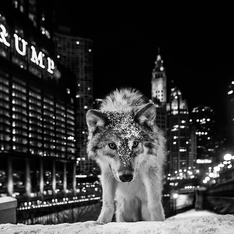 David Yarrow It Is Only A Matter of Time 2 featured