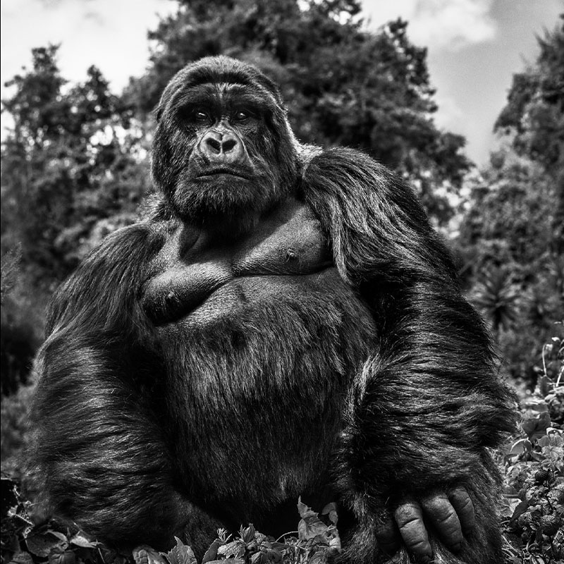 David Yarrow Judge and Jury featured