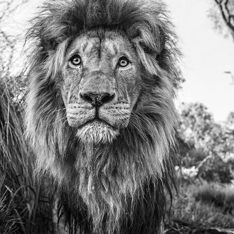 David Yarrow Kingdom featured