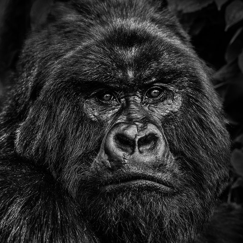 David Yarrow Kong featured