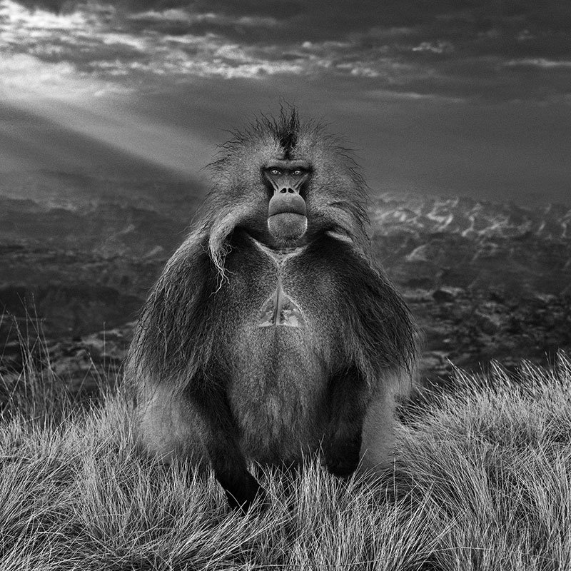 David Yarrow Members Only featured