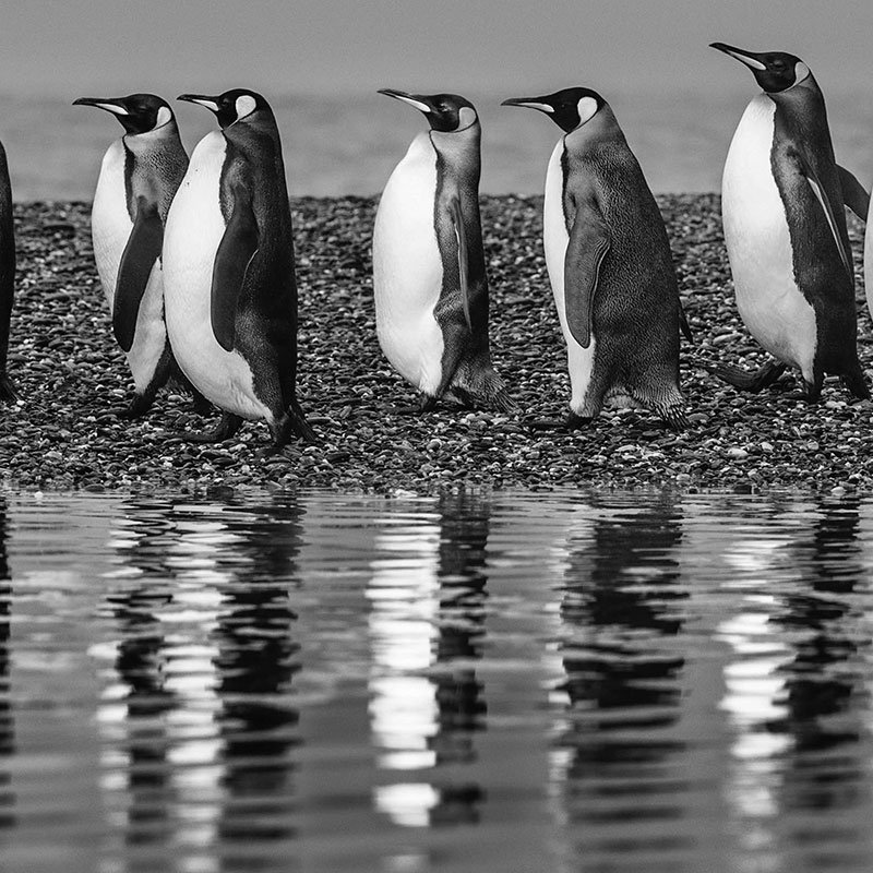 David Yarrow Oceans Eleven featured