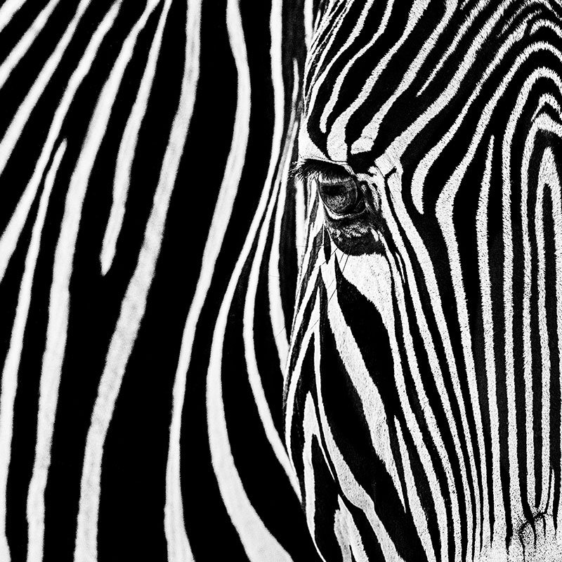 David Yarrow Parallel Lines featured