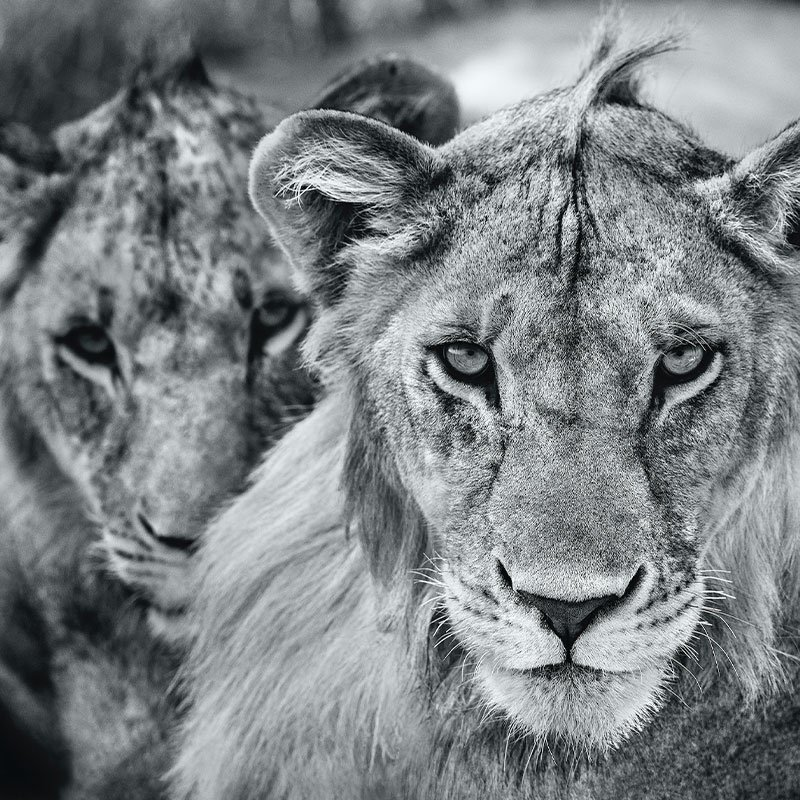 David Yarrow The Boys are Back in Town featured