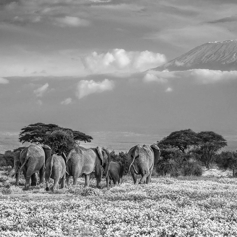 David Yarrow The Garden of Eden featured
