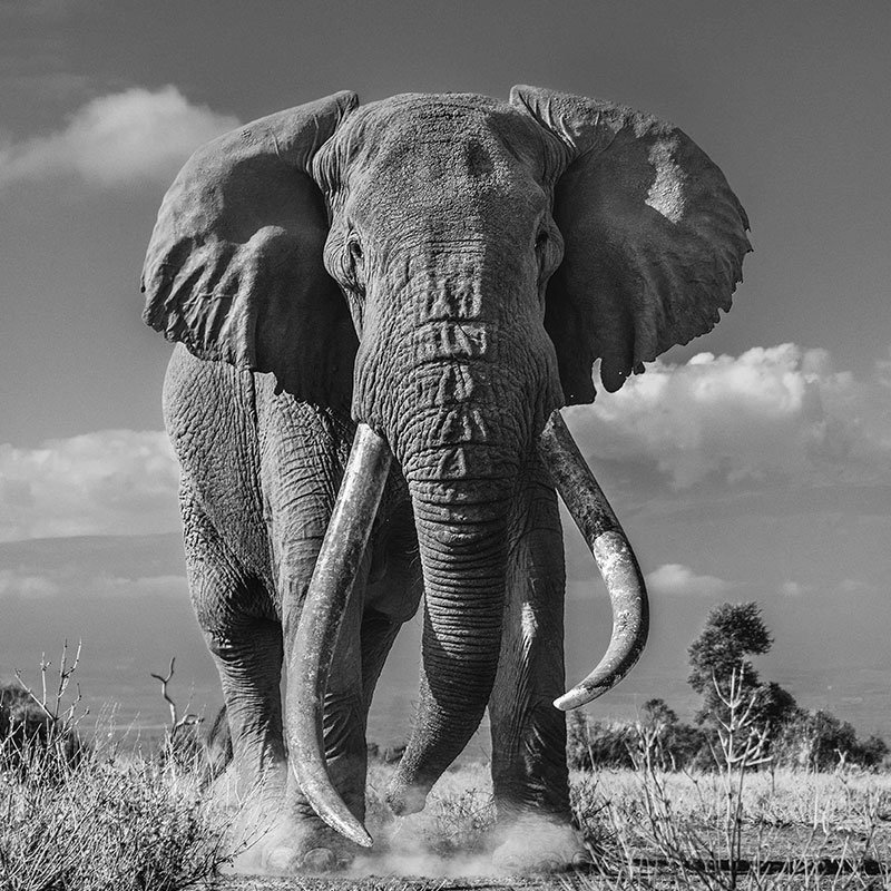David Yarrow Tim featured