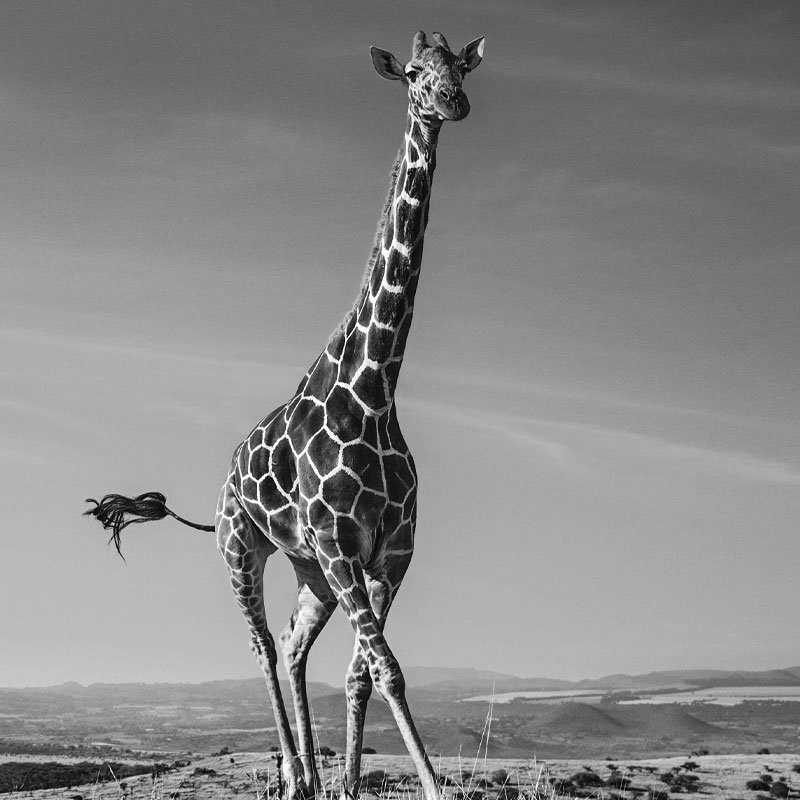 David Yarrow Tiny Dancer featured