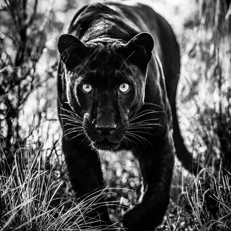 David Yarrow Wakanda featured