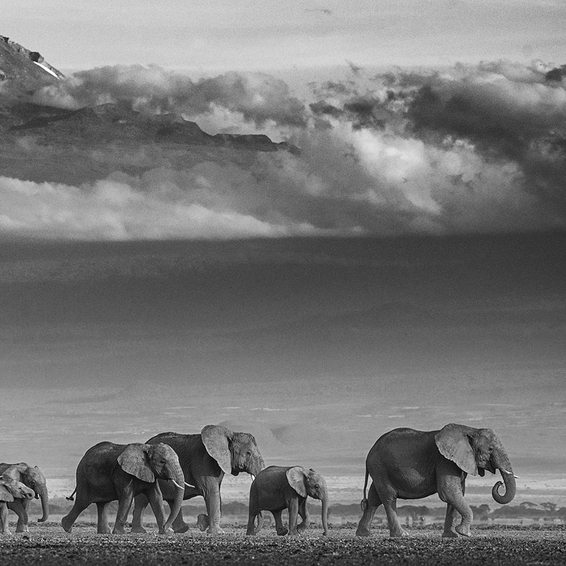 David Yarrow Walk The Line featured