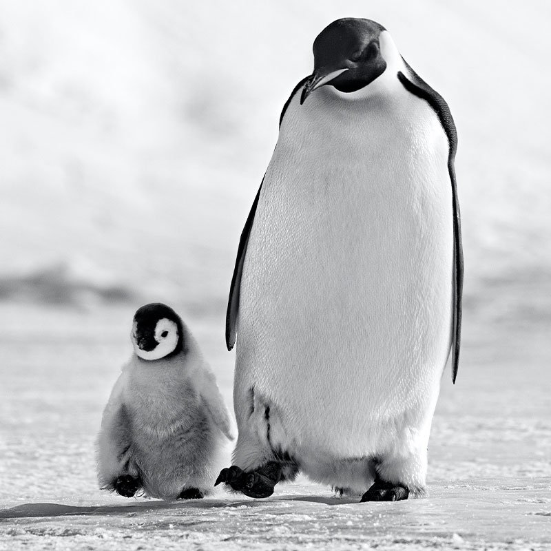 David Yarrow Father and Son featured