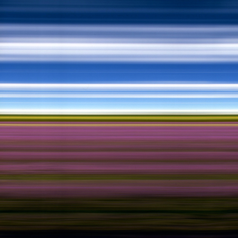Rob Nick Carter Lavender Field II featured