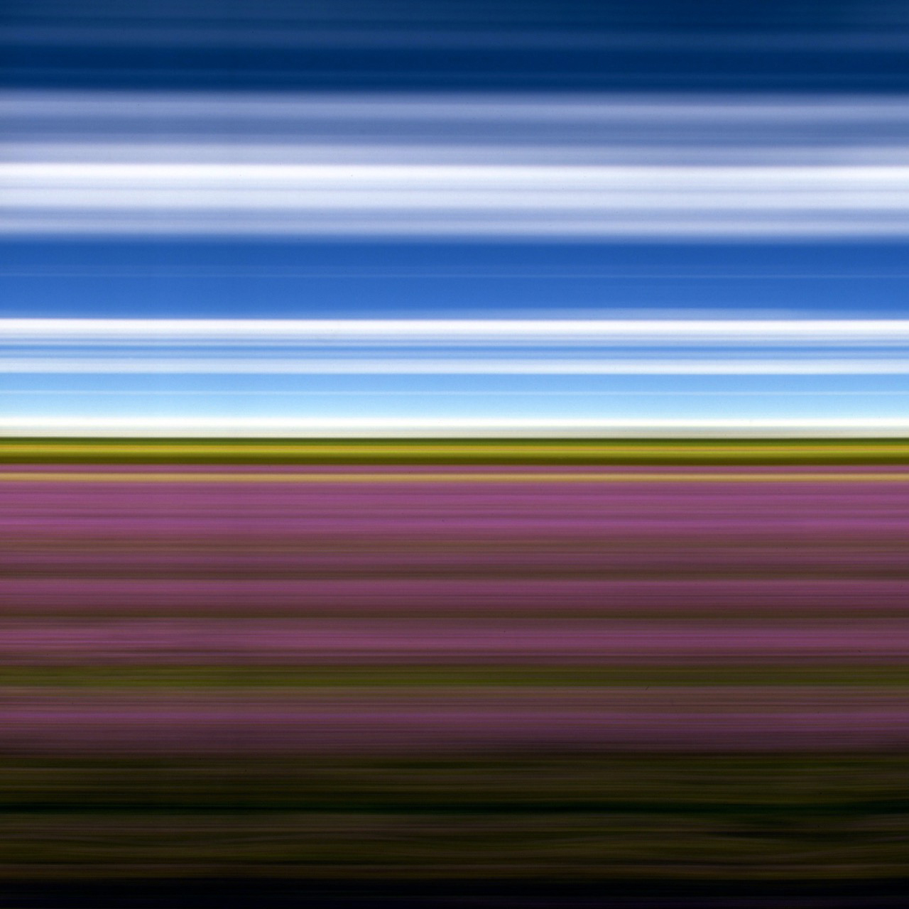Rob Nick Carter Lavender Field II